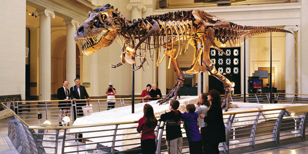 a dinosaur exhibit in a museum
