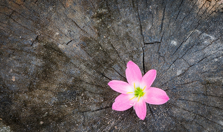 Flower blooms from wood